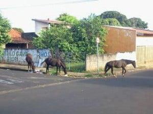 Por irresponsabilidade, animais podem causar acidentes graves (Foto: Nelinho Moraes)