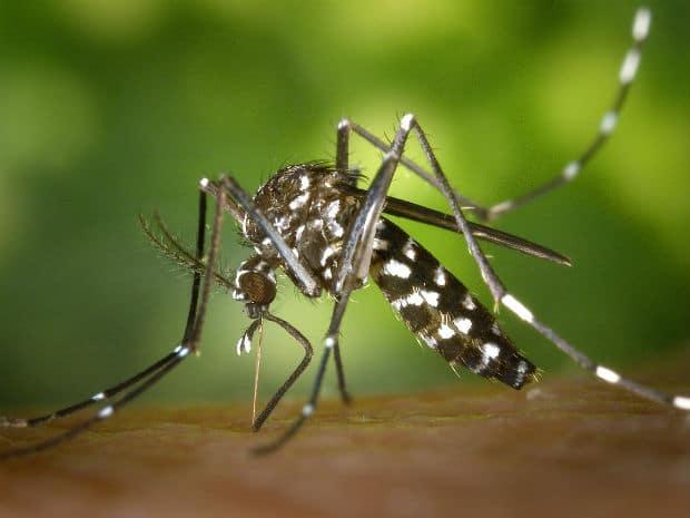 Médico confirma morte por dengue em Paraguaçu Paulista