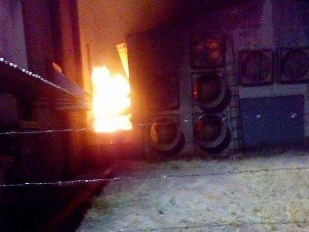 Aves morreram por causa do calor causado pelas chamas (Foto: Valdecir Luís/ imagens cedidas)