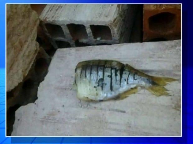 Peixe com veneno foi localizado por moradora (Foto: Reprodução / TV TEM)