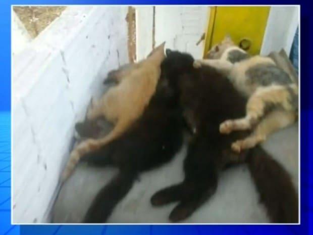 Gatos foram encontrados mortos (Foto: Reprodução / TV TEM)