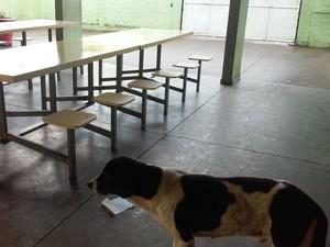 Animais foram flagrados na cozinha e refeitório de escola em Borebi (Foto: TCE Regional /Divulgação