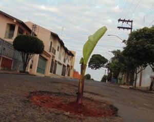Moradores plantaram a bananeira como forma de protesto na Rua Visconde do Rio Branco (Foto: Diego Di Paula/AssisNews)