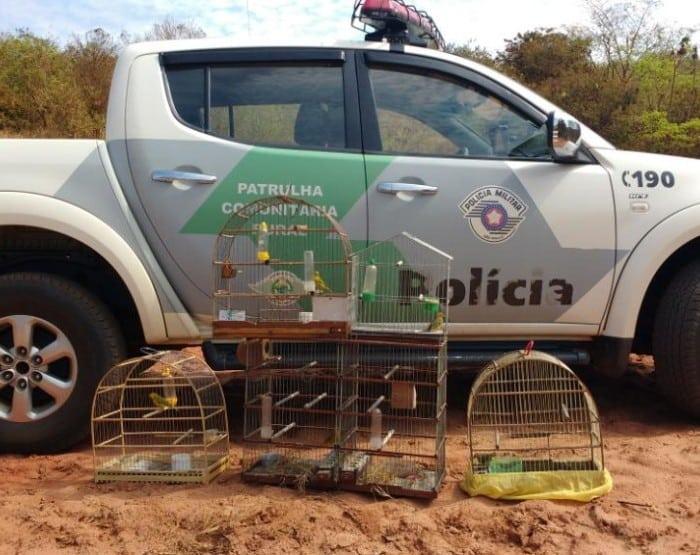 Pássaros foram apreeendidos em Lutécia (Foto: Divulgação / Polícia Ambiental)