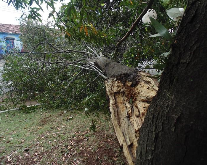Ventania de sábado a noite derruba árvores em Assis (Foto: Diego Di Paula/AssisNews)