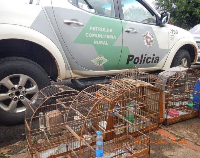 Pássaros são apreendidos pela Polícia Ambiental (Foto: Polícia Ambiental/Divulgação)