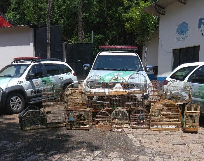 Pássaros foram apreendidos em Platina (Foto: Polícia Militar Ambiental/Divulgação)