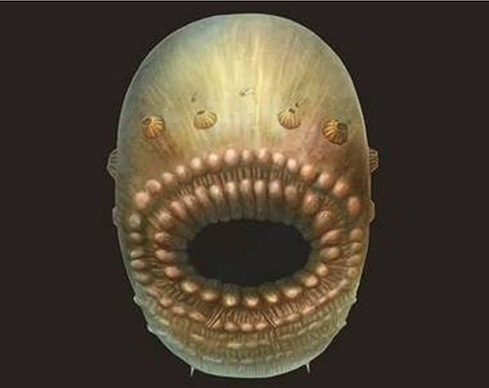 Uma reconstrução do que seria o Saccorhytus a partir dos fósseis encontrados (Foto: Universidade de Cambridge )