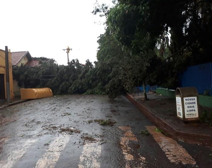 Árvores caíram durante temporal em Palmital (Foto: Luiz Renato Mantovani/Arquivo Pessoal)