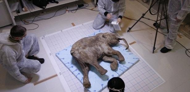 Lyuba, filhote de mamute de 40 mil anos, é um dos espécimes mais bem preservados que existem. Ela foi descoberta por um pastor de renas da Sibéria e seus dois filhos, em 2007 (Foto: Ria Novosti)