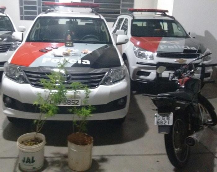 Pés de maconha foram apreendidos com o trio de suspeito (Foto: Polícia Militar/ Divulgação)