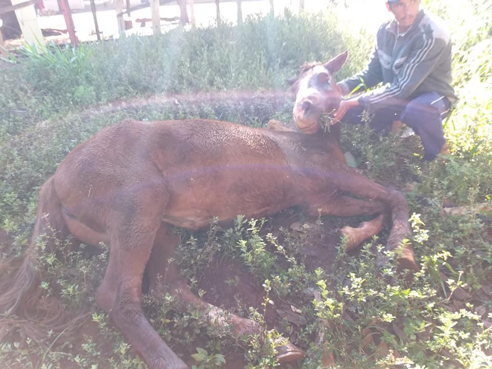 Égua é esfaqueada no olho em Cândido Mota (Foto: Jose Clóvis Zambito)